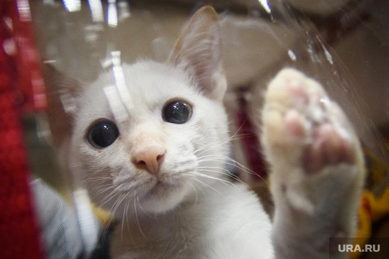 Коронавирус: последние новости 27 мая. В России заболела кошка, медики просят защиты у Путина, цены на отдых в Крыму снизятся