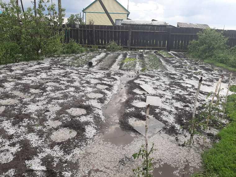 Град уничтожил посевы жителей Курганской области. ФОТО