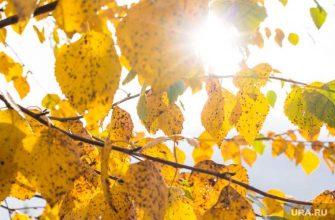температура первая неделя сентябрь