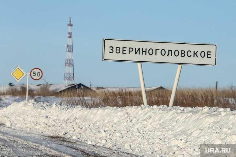 выборы Звериноголовский район