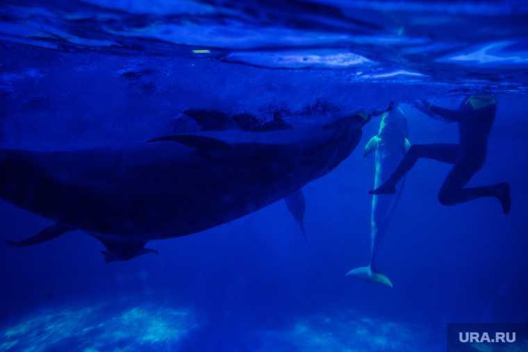 океанариум дельфинариум вылов дельфины касатки запрет браконьерство