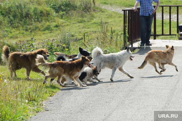бездомные собаки в хмао бродячие псы проблема беспризорных животных приют в нижневартовске