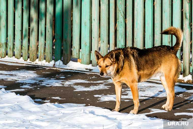 бродячие собаки Нижний Тагил