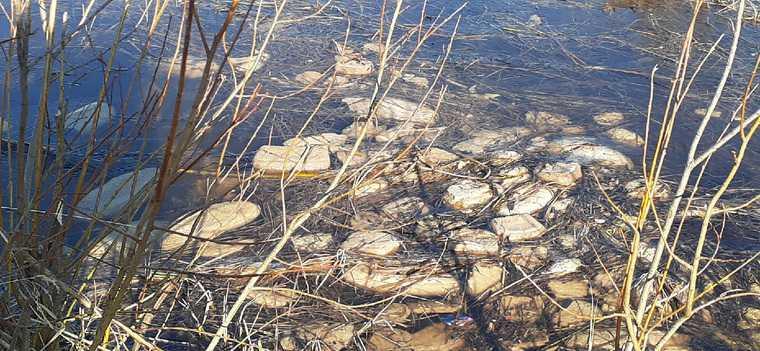 Легендарное озеро ЯНАО засыпали хлебом. Фото