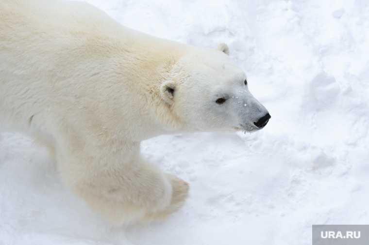 зачем России военные объекты в Арктике