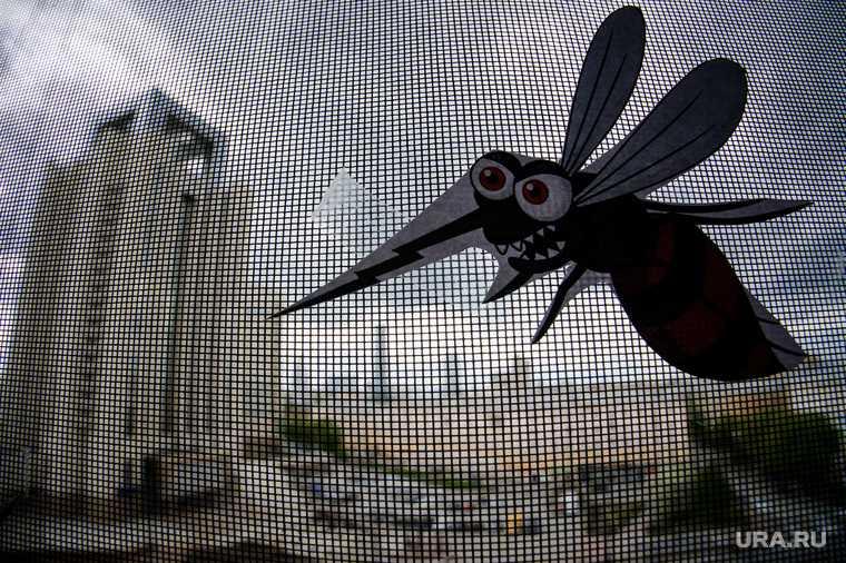 комары и способы борьбы с ними