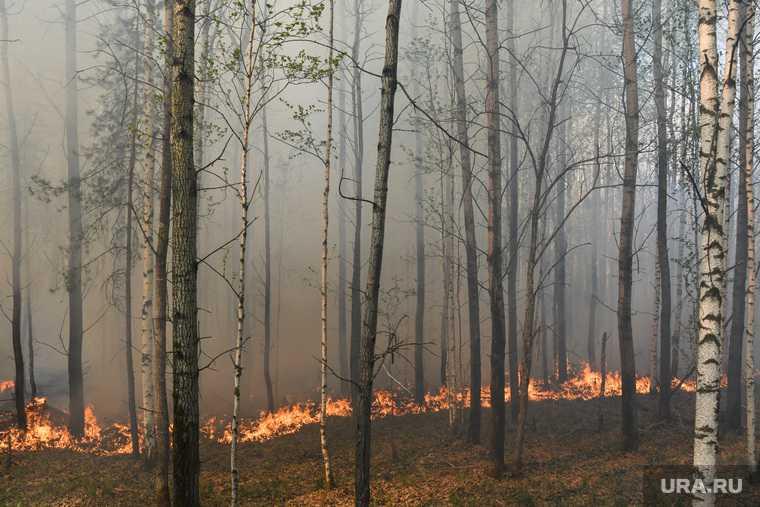 ХМАО противопожарный режим