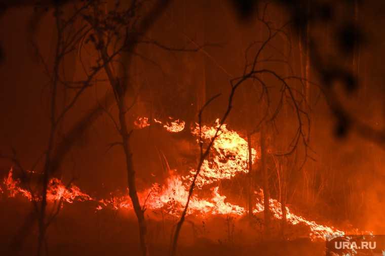 огонь в лесу